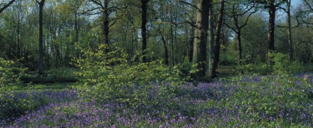 Thorpe Wood Gamlingay