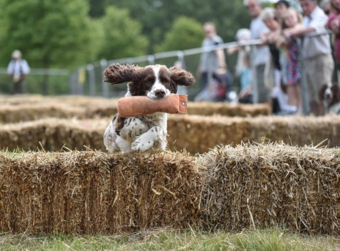Burghley Country Show